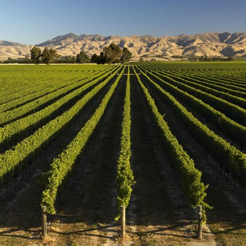 Top 10 Wineries to Visit in Marlborough